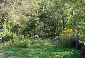 jardin-du-fond